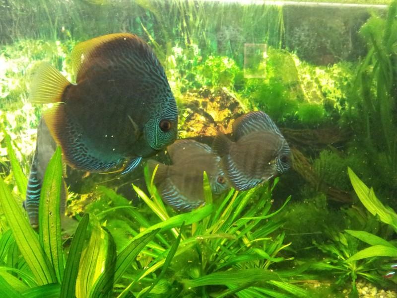 Akvarium s rybičkami