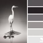 Gray white1